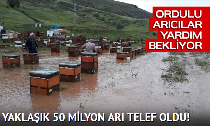 ARILAR SELDE TELEF OLDU