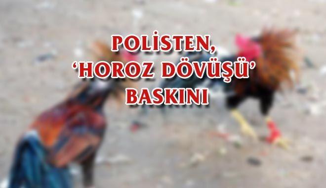 Ünye'de Horoz Dövüşçülerine Baskın
