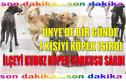 ÜNYE'DE KUDUZ KÖPEK KORKUSU