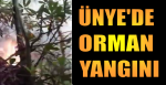 ÜNYE ERENYUT'TA ORMAN YANGINI