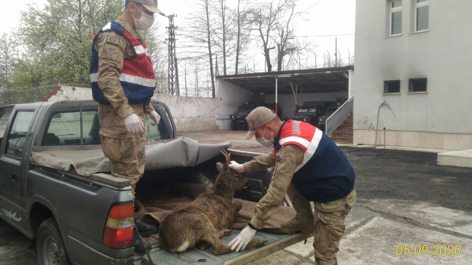 Yaralı Karacaya Jandarma Şefkati