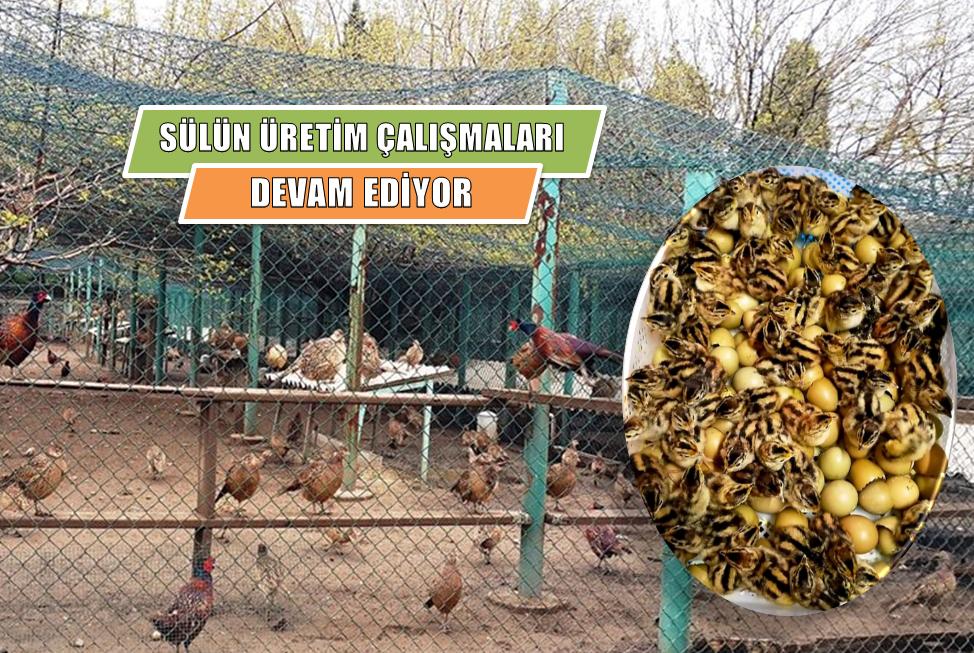 TÜRKİYE'NİN 81 İLİNE 1000'ER KANATLI YABAN HAYVANI