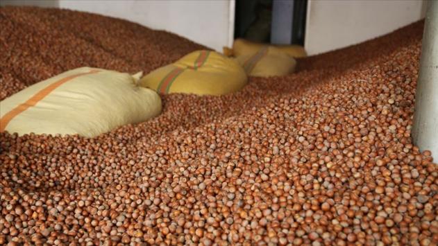 İhracatçıların fındık rekoltesi 670 bin ton…