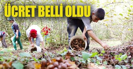 FINDIK YEVMİYELERİ BELLİ OLDU!