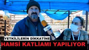 HAMSİ KATLİAMINA DİKKAT
