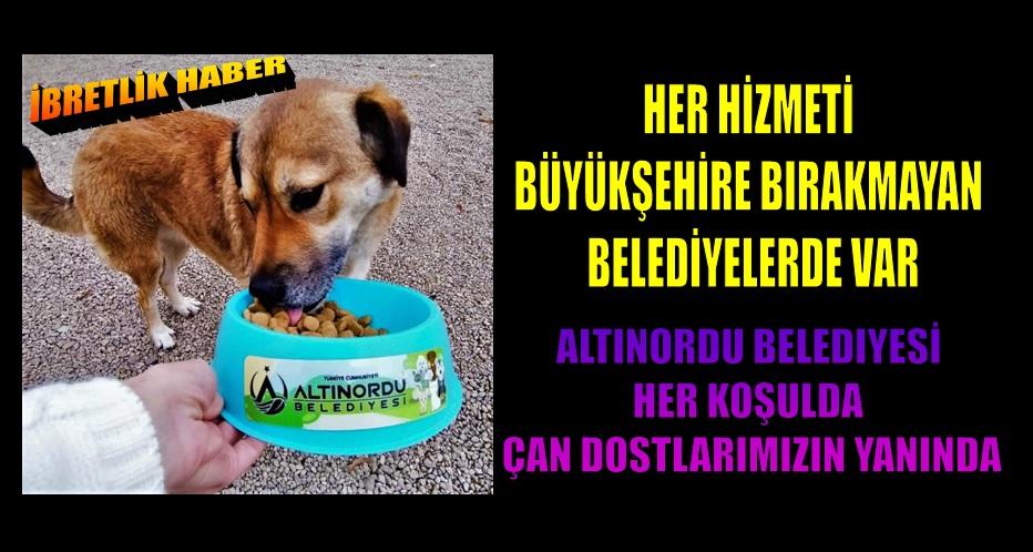 ALTINORDU BELEDİYESİNDEN ALTIN HAREKET