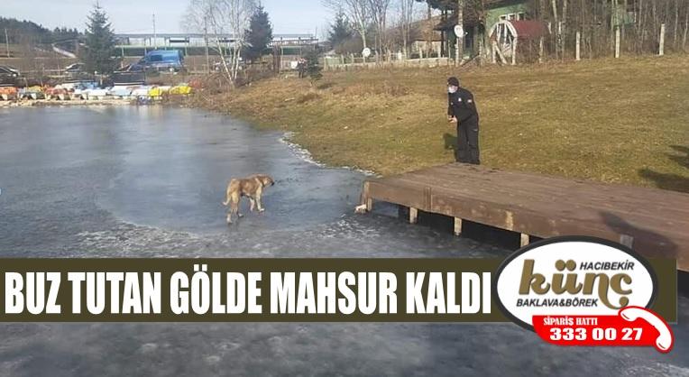 BUZ TUTAN GÖLDE MAHSUR KALDI