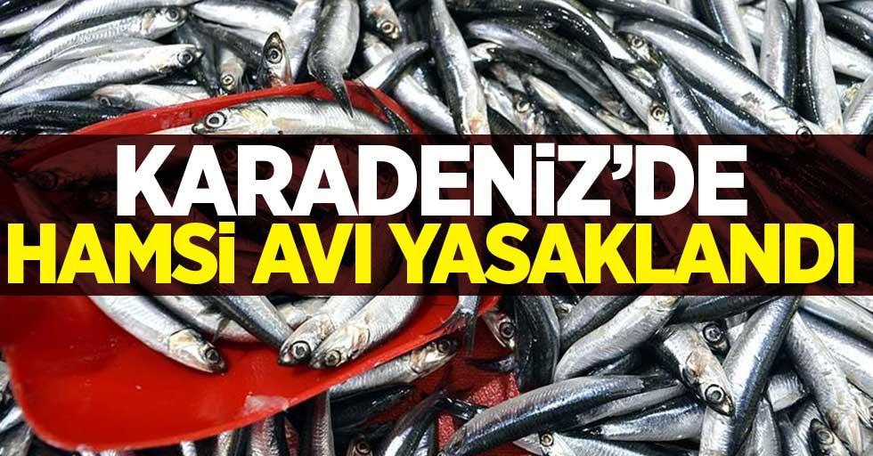 KARADENİZ'DE HAMSİ AVI 10 GÜN YASAKLANDI!