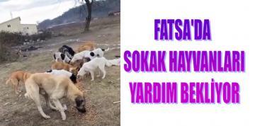 FATSA'DA SOKAK HAYVANLARI YARDIM BEKLİYOR