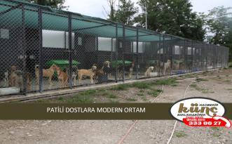 PATİLİ DOSTLARA MODERN ORTAM