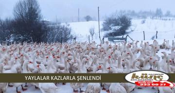 YAYLALAR KAZLARLA ŞENLENDİ