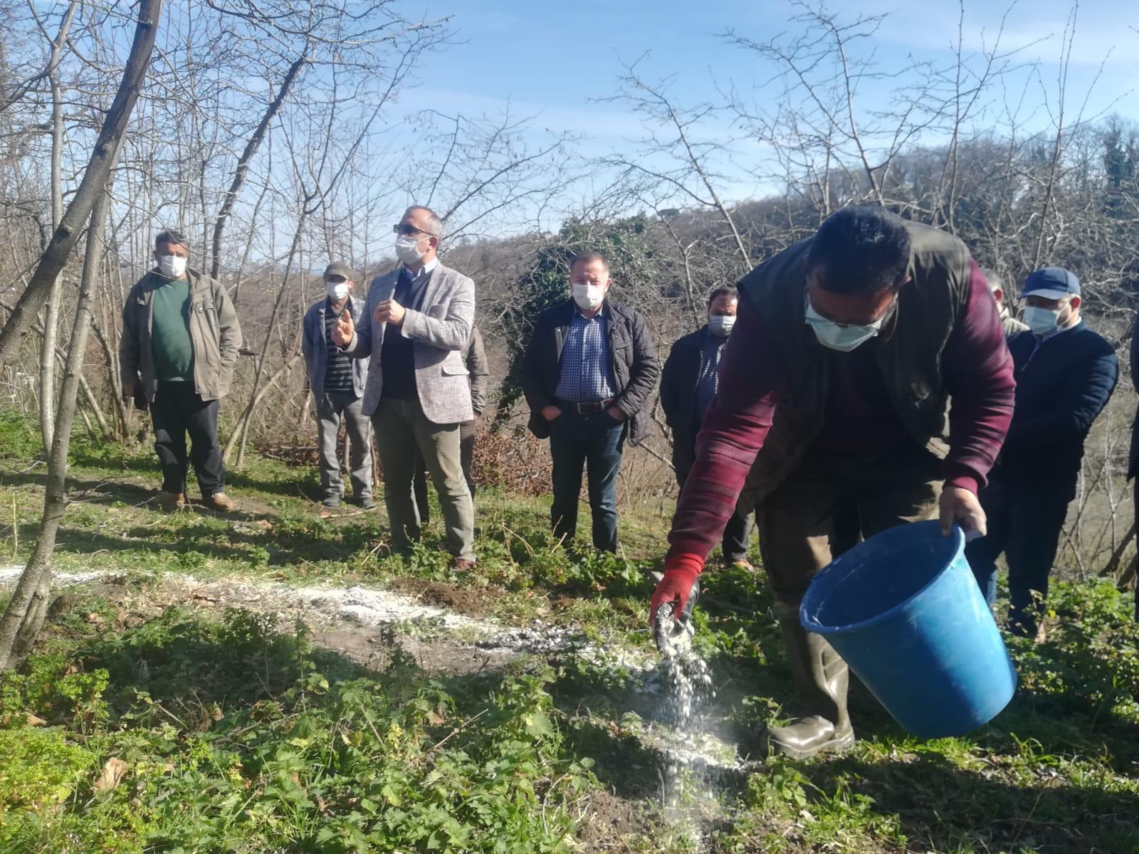 Organik Fındık Tarım Okulu'nda Fındık Yetiştiriciliği Eğitimi Verildi