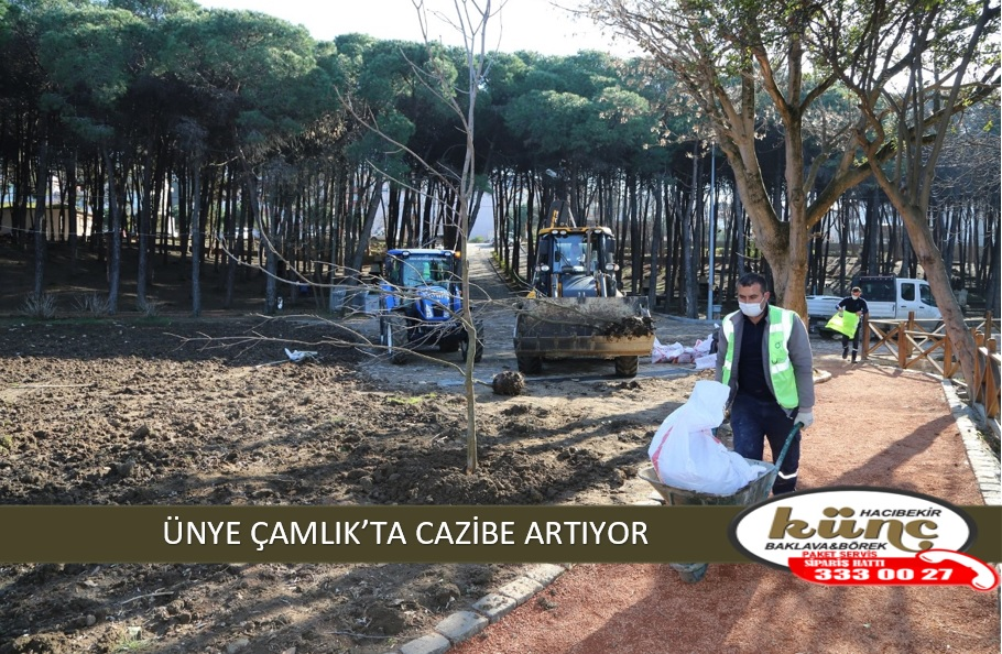ÜNYE ÇAMLIK'TA CAZİBE ARTIYOR