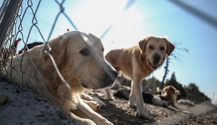 Hayvan Hakları Yasası'nda sona gelindi!